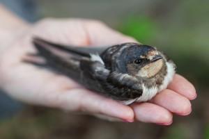 Орнитоз: чем можно заразиться от птицы