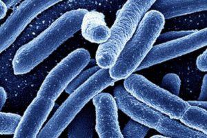 Суперустойчивый бактериальный штамм обнаружен и в США