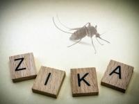 Заражение вирусом Зика на поздних сроках беременности не приводит к нарушениям развития плода