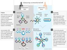 Донорские иммунные клетки помогут вылечить рак