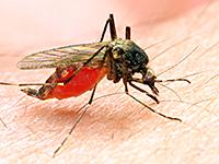 Novartis вместе с Medicines for Malaria Venture займутся разработкой нового ЛС против малярии