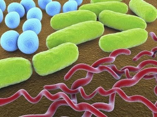 Пятиминутный тест обнаружит бактериальную инфекцию