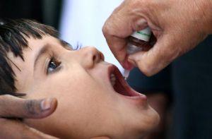 Живая вакцинация полиомиелита