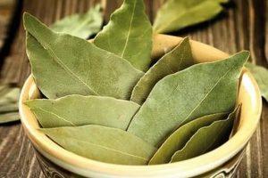 Лавровый лист улучшает циркуляцию крови, является мочегонным, антисептиком и антибиотиком