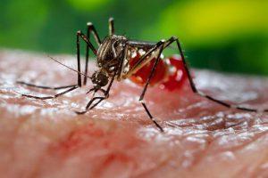 В Иркутской области в этом году зафиксированы два случая лихорадки Денге