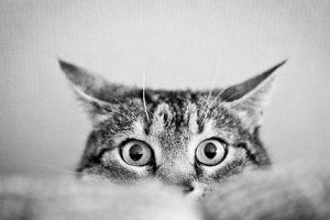 Болезни глаз у котов: что нужно знать хозяину?