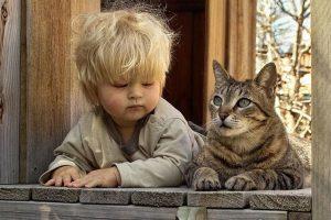 Коты вызывают экзему у детей