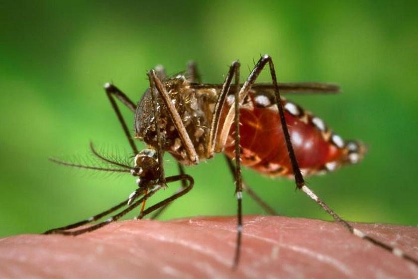 Ученые в США запустят 20 млн комаров для борьбы с распространением вируса Зика и лихорадки Денге