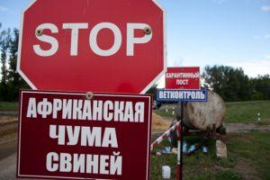 Как защищаются от опасного вируса на алтайских свинофермах