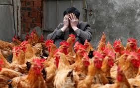Мутировавший вирус птичьего гриппа может стать причиной пандемии