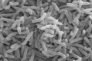 ВОЗ разработала глобальный план по борьбе с холерой