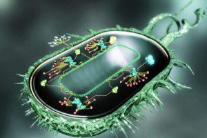 Невесомость усиливает выживаемость бактерий и сопротивляемость лекарствам