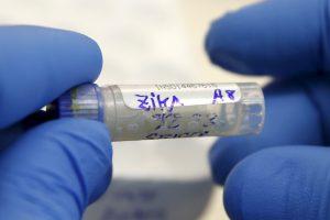 Ученые предполагают, что вирус Зика может передаваться половым путем