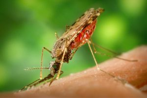 Однократное введение нового препарата поможет справиться с малярией