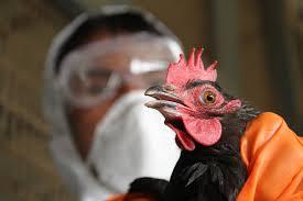 Людям угрожает новый штамм птичьего гриппа