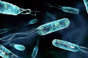 Скорость развития СПИДа зависит от ДНК митохондрий