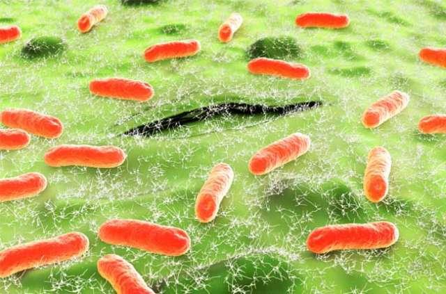 Какое лекарство можно принимать от кишечной инфекции