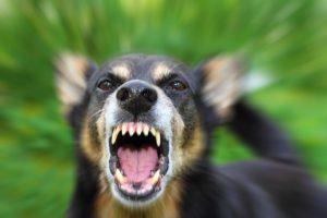 В Воронеже в ветеринарной клинике нашли вирус бешенства: объявлен карантин