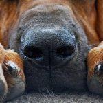 Четыре новых пункта вакцинации домашних животных от бешенства