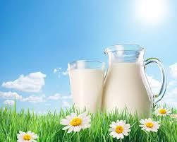 В молоке нашли смертельно опасные бактерии