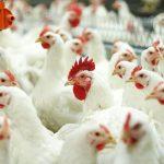 В Китае зафиксированы первые случаи птичьего гриппа