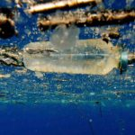Революция в утилизации отходов: бактерия, пожирающая пластик