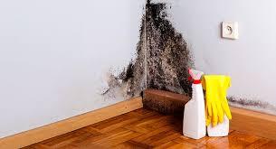 Как побороть плесень в доме