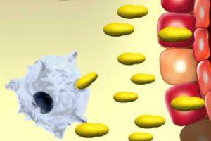 Как повысить иммунитет взрослому человеку народными средствами