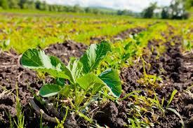 Направление повышение эффективности работы предприятий растениеводства