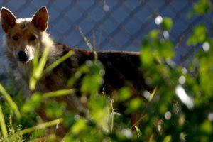 В России участились случаи нападения животных на людей