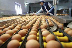 Россельхознадзор разрешил ввоз птицы и яиц из Швеции
