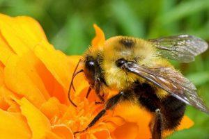 Экзему можно эффективно лечить пчелиным ядом