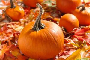 Назван один из самых полезных овощей для кишечника
