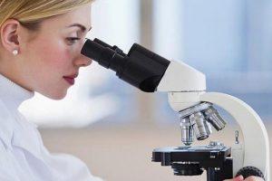 Найдена бактерия, укрепляющая иммунитет
