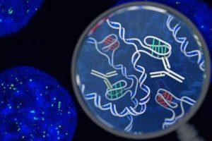 В живых клетках обнаружена ДНК, имеющая абсолютно новую структуру