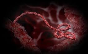 В Африке стартуют официальные испытания лекарств против лихорадки Эбола