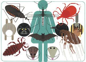 Какой переносчик инфекций опаснее для человека — грызуны или летучие мыши?