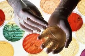 Россия всерьез займется проблемой резистентных бактерий