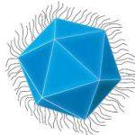 У гигантских вирусов нашли бактериальную «иммунную систему»