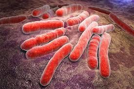 Свойства возбудителя туберкулеза