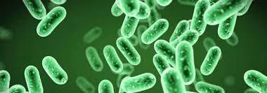 Диагностическая значимость исследования микрофлоры эякулята у больных хроническим бактериальным простатитом методом PCR-RT «Андрофлор»