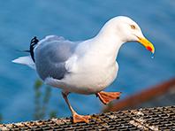 Птицы могут спровоцировать мировую эпидемию суперинфекций