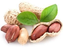В США готовится к регистрации первая терапия аллергии на арахис