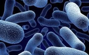 Обзор анаэробных бактерий