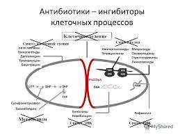 Линкозамиды, оксазолидиноны и стрептограмины