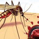 Проблема малярии может исчезнуть в течение ближайшего десятилетия