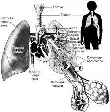 Клиническая физиология дыхания