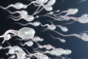 Диета влияет на количество сперматозоидов у мужчин