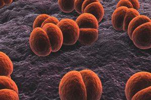 Коварству нет предела: почему менингококковую инфекцию легче предупредить, чем вылечить