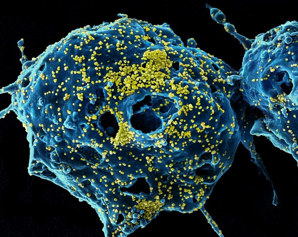 Против коронавируса придумывают двойное оружие